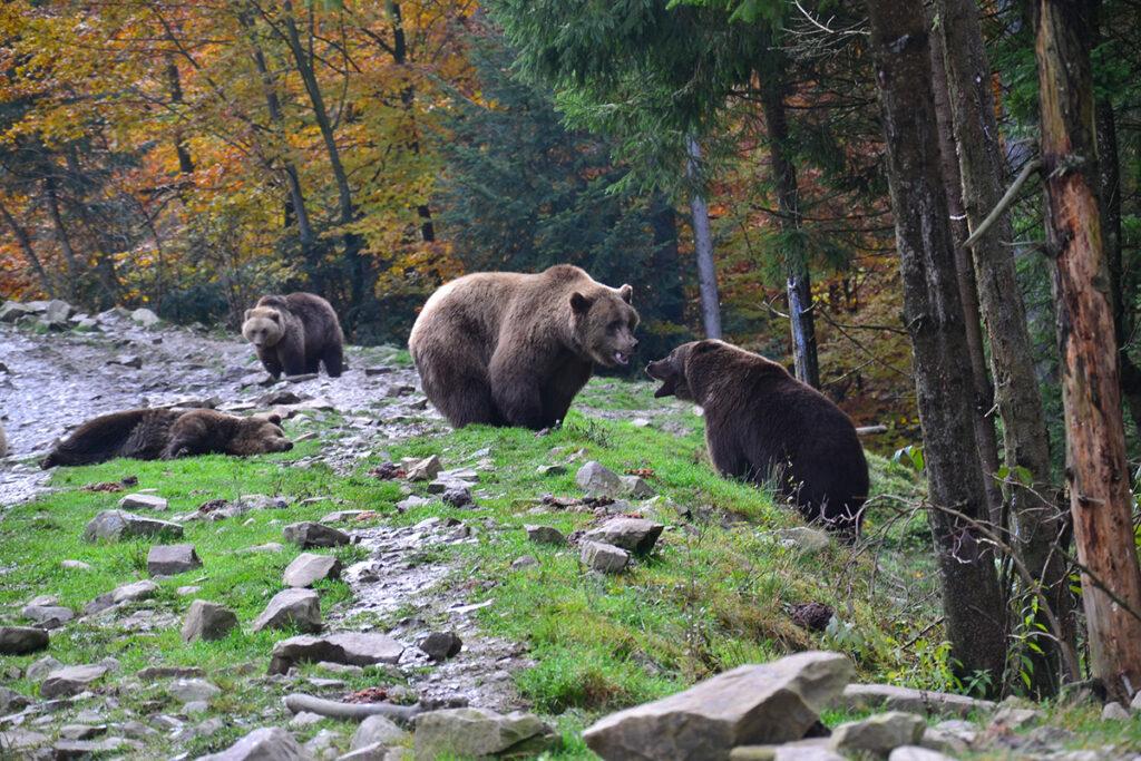 Відвідування центру реабілітації бурих ведмедів
